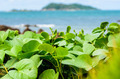 Green plants and sea nature landscape - PhotoDune Item for Sale