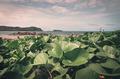 Green plants and sea nature landscape vintage - PhotoDune Item for Sale