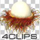 Rambutan Fruit - VideoHive Item for Sale