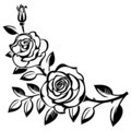 Branch of roses - PhotoDune Item for Sale