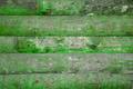 Green wooden background. - PhotoDune Item for Sale