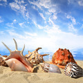 Sea shells on beach - PhotoDune Item for Sale