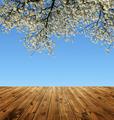Blooming branch tree - PhotoDune Item for Sale