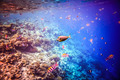 Tropical Coral Reef. - PhotoDune Item for Sale