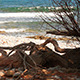 Old Tree By the Sea - VideoHive Item for Sale