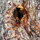 Hornet'S Nest In Tree Hollow - VideoHive Item for Sale