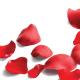 Rose Petals - GraphicRiver Item for Sale