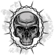 Skull Illustration - GraphicRiver Item for Sale