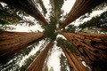 Giant tree - PhotoDune Item for Sale