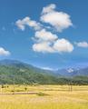 paddy farm - PhotoDune Item for Sale