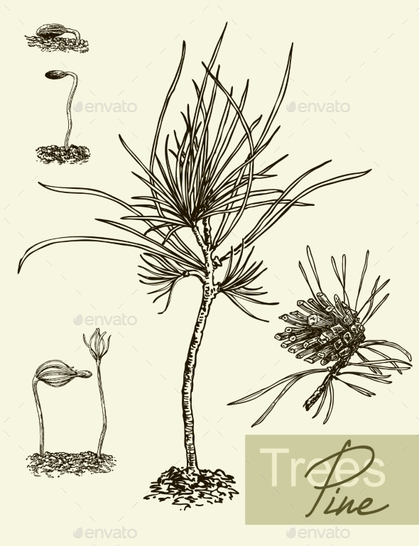 GraphicRiver Sprout Leaves and Pine 10881914