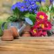 springtime flowers - PhotoDune Item for Sale