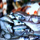 Sea Fish - VideoHive Item for Sale