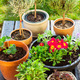 Flower pots with herbs and flowers - PhotoDune Item for Sale