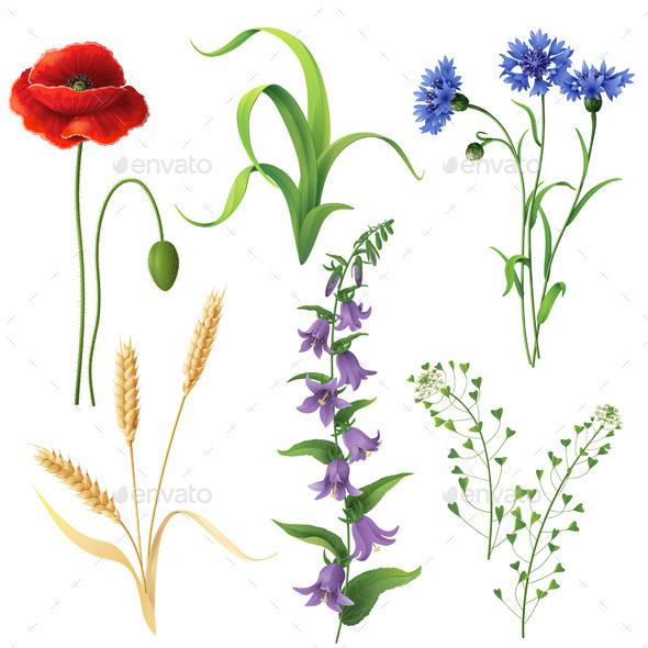 GraphicRiver Wildflowers Set 10891694