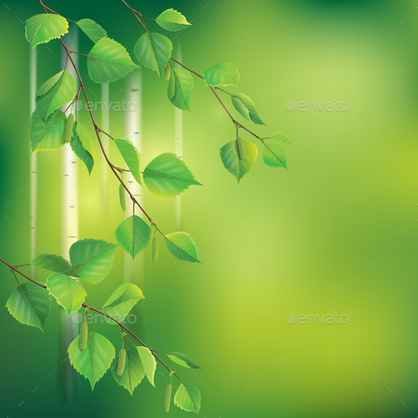 GraphicRiver Birch Branches on Green 10891812