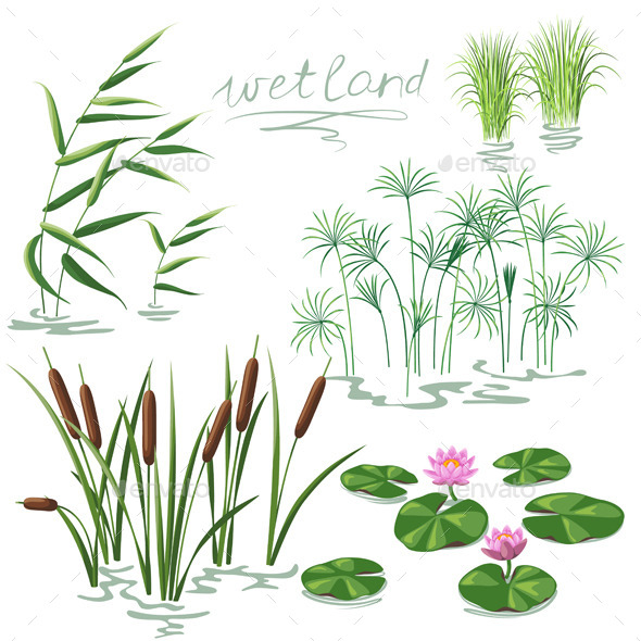 GraphicRiver Wetland Plants Set 10892225