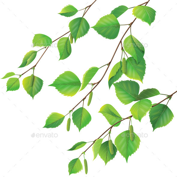 GraphicRiver Birch Branches 10892351