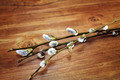 Willow branches - PhotoDune Item for Sale