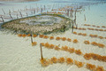 Seaweed farming - PhotoDune Item for Sale