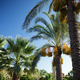 Palm trees over blue sky background - PhotoDune Item for Sale