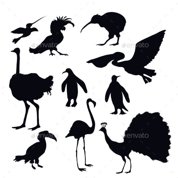 GraphicRiver Exotic Birds Silhouettes 10906086