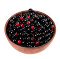 Blackcurrants and redcurrants in ceramic bowl - PhotoDune Item for Sale