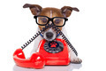 dog on the phone - PhotoDune Item for Sale