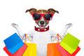 shopping dog - PhotoDune Item for Sale