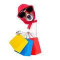 shopping diva dog - PhotoDune Item for Sale