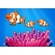 Clownfishes Under the Sea - GraphicRiver Item for Sale