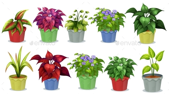 GraphicRiver Potted Plants 10914634