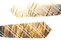Double exposure necktie on a forest background - PhotoDune Item for Sale