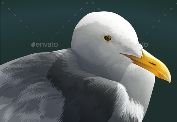 GraphicRiver Seagull 10915584