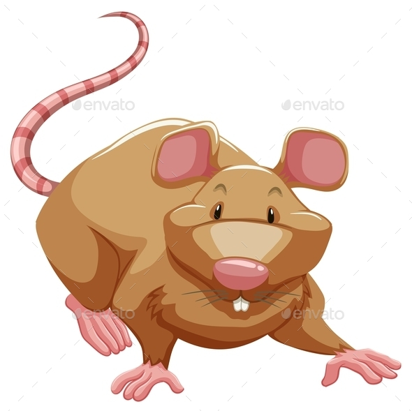 GraphicRiver Rat 10915594