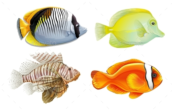 GraphicRiver Tropical Fish 10915614