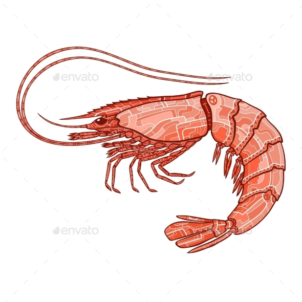 GraphicRiver Decorative Shrimp 10921005