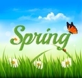 Spring background with grass, sky and a butterfly.  - PhotoDune Item for Sale