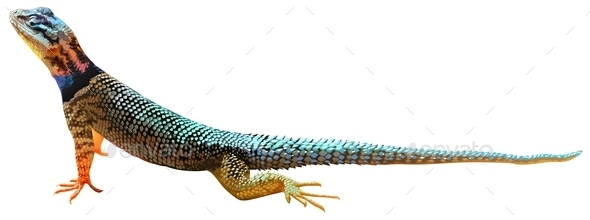 GraphicRiver A Lizard 10923907