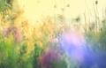 Meadow - PhotoDune Item for Sale