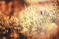 Sunny meadow - PhotoDune Item for Sale