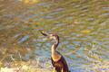 Cormorant - PhotoDune Item for Sale