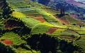 Field in Java - PhotoDune Item for Sale