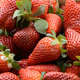 Strawberries - VideoHive Item for Sale