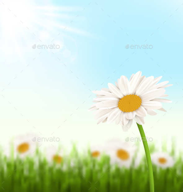GraphicRiver Grass Lawn with White Chamomiles Flowers Sunlight 10928121