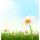 Grass Lawn with White Chamomiles Flowers Sunlight - GraphicRiver Item for Sale
