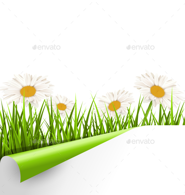GraphicRiver Grass Lawn with White Chamomiles and Wrapped Paper 10928171