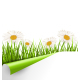 Grass Lawn with White Chamomiles and Wrapped Paper - GraphicRiver Item for Sale