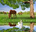 Herd of horses in a spring landscape - PhotoDune Item for Sale