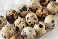 Quail Eggs On Tray - PhotoDune Item for Sale